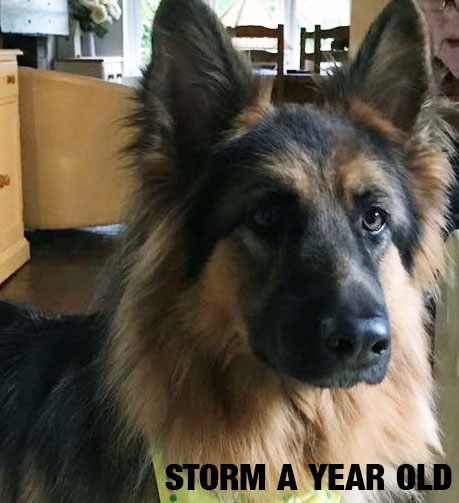 Storm a year old